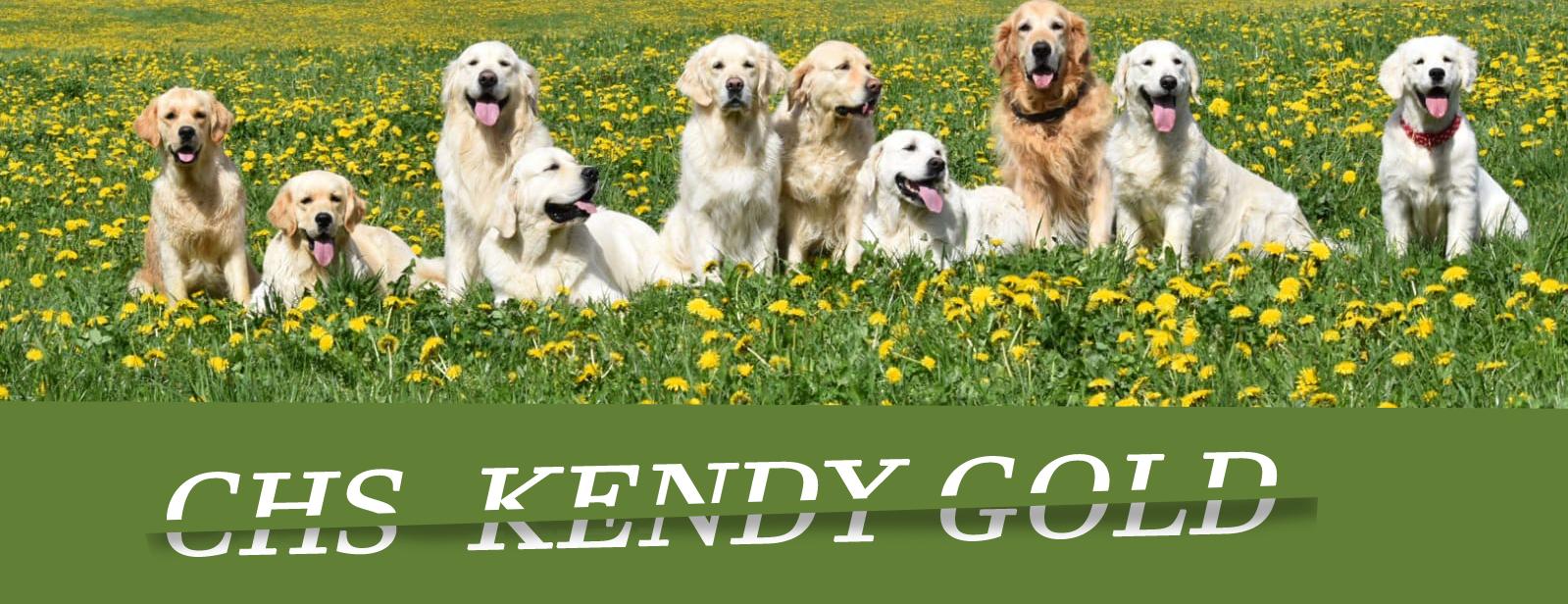 Chovatelská stanice Kendy Gold